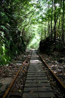 森林 - No.228443