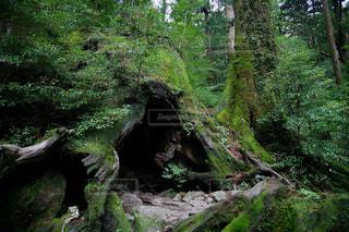 森林の写真・画像素材[228444]