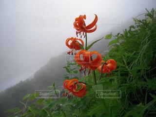 自然の写真・画像素材[200658]