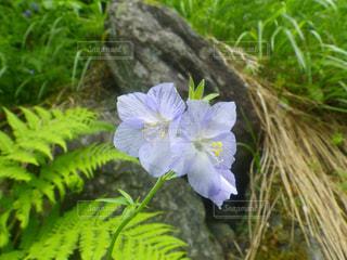 自然の写真・画像素材[200677]