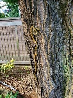 蛇の写真・画像素材[4518623]
