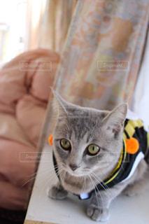 猫の写真・画像素材[197042]