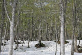 森林の写真・画像素材[202014]