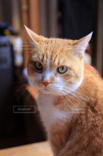 猫の写真・画像素材[199243]