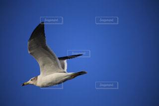 鳥 - No.259735
