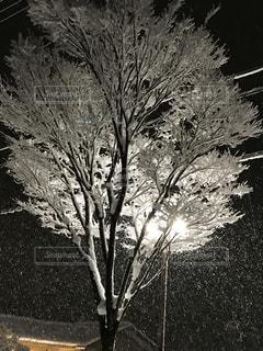 冬の写真・画像素材[313865]