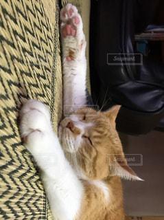 寝る猫の写真・画像素材[765189]