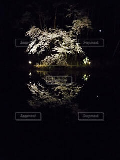 夜桜の写真・画像素材[4623528]