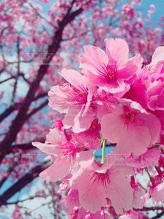 春の写真・画像素材[20413]