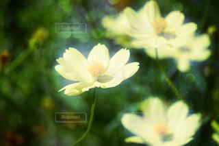 自然の写真・画像素材[207717]