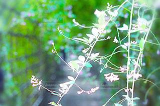 風景 - No.229671
