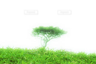 背景の木と大規模なグリーン フィールド - No.916895