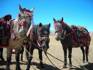 馬の写真・画像素材[229605]