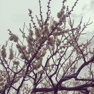 春の写真・画像素材[345674]