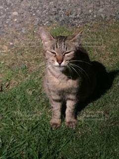 草の上に座って猫対象フィールドの写真・画像素材[1321252]