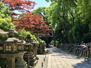 赤や緑の色鮮やかな樹々と静かな参道の写真・画像素材[4734789]