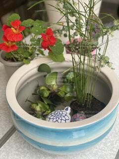 ボウルに座っている花の花瓶の写真・画像素材[4512905]