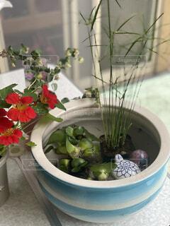 ガラスのボウルの植物の写真・画像素材[4512902]