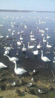 鳥のクローズアップの写真・画像素材[4564419]