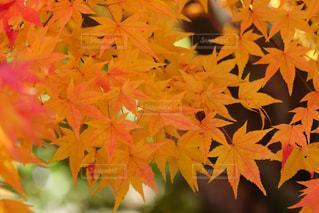 秋の写真・画像素材[688148]