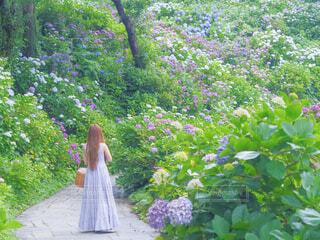 紫陽花とワンピースの写真・画像素材[4505304]
