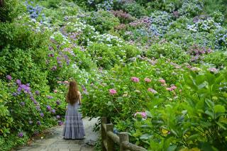 紫陽花と私の写真・画像素材[4529769]
