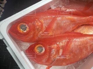 魚のクローズアップの写真・画像素材[4504275]