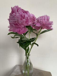 ピンクの花で満たされた花瓶の写真・画像素材[4561979]