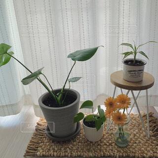 テーブルの上に花の花瓶の写真・画像素材[4570319]