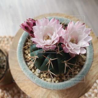 テーブルの上にピンクの花で満たされた花瓶の写真・画像素材[4590432]
