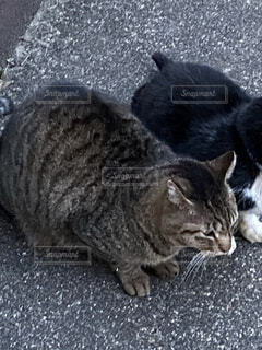 猫の写真・画像素材[4508883]