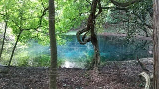 森の中の木の写真・画像素材[4508826]