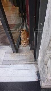 木のドアの上に座っている猫の写真・画像素材[4654077]