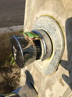水道ボタンにカエルの写真・画像素材[4510582]