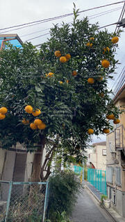 街中の果実の写真・画像素材[4513034]