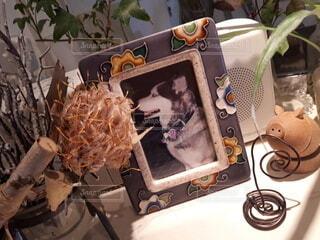ハスキー犬の写真の写真・画像素材[4550184]