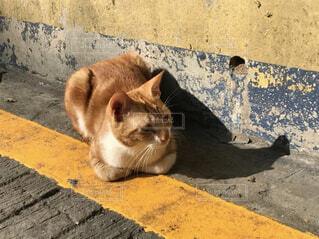 ひなたぼっこしている猫の写真・画像素材[4511686]