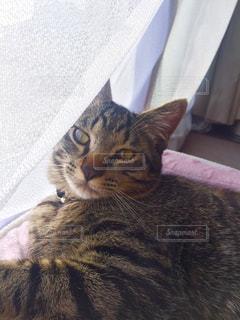猫の写真・画像素材[198313]