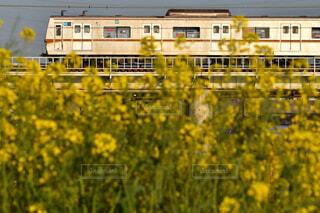 地下鉄と菜の花のコラボの写真・画像素材[4517428]
