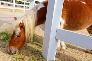綺麗なお馬さん🐎の写真・画像素材[4548593]