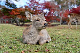 鹿の見つめる先にはの写真・画像素材[4520892]