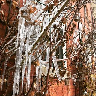 iciclesの写真・画像素材[1026069]