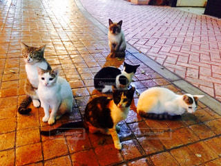 猫の写真・画像素材[214882]