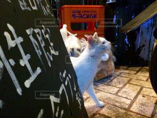 猫の写真・画像素材[226052]