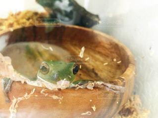 カエルさんのお風呂の写真・画像素材[4517549]