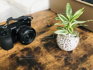 カメラと観葉植物の写真・画像素材[4520089]