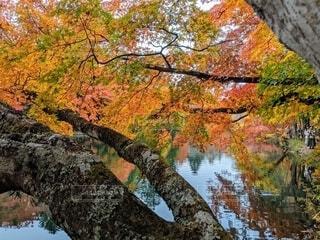 色とりどりの紅葉の写真・画像素材[4647304]