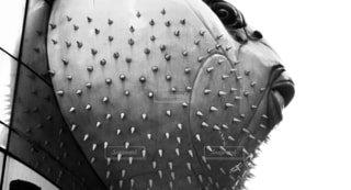 パンクなフグの写真・画像素材[865205]
