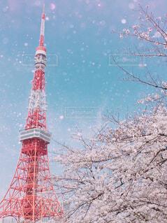 東京タワーと満開の桜の写真・画像素材[4521782]