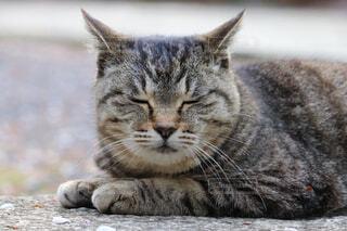 Sleeping catの写真・画像素材[4527365]